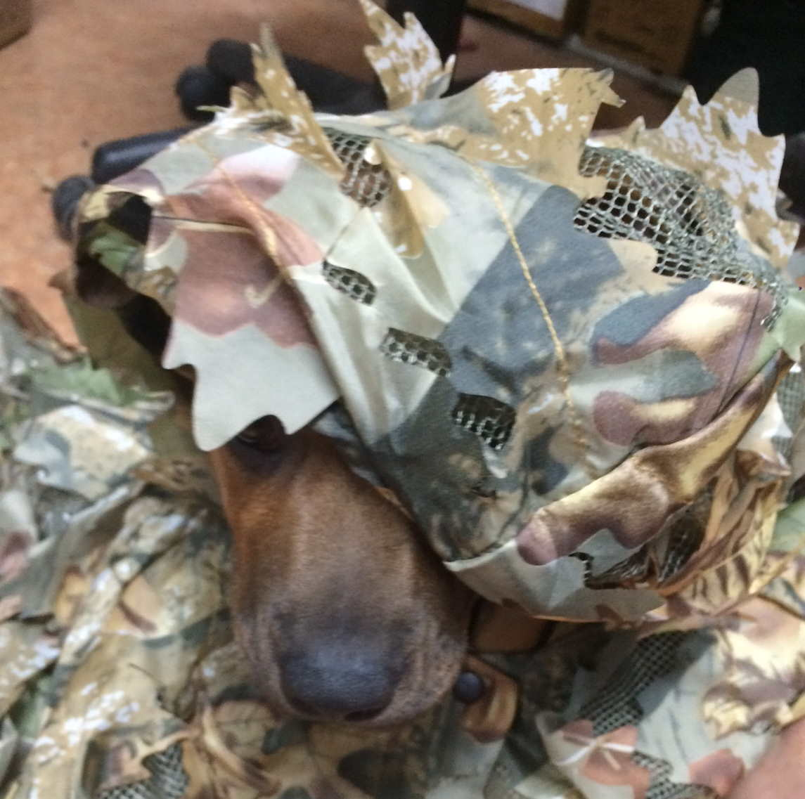 I don't fit into my camo yet!